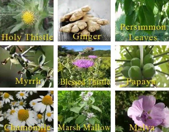 iaso-tea-ingredients